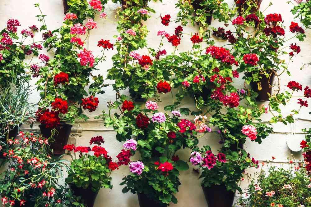 Córdoba en mayo sabe a fiesta y huele a flor - Juridiomas